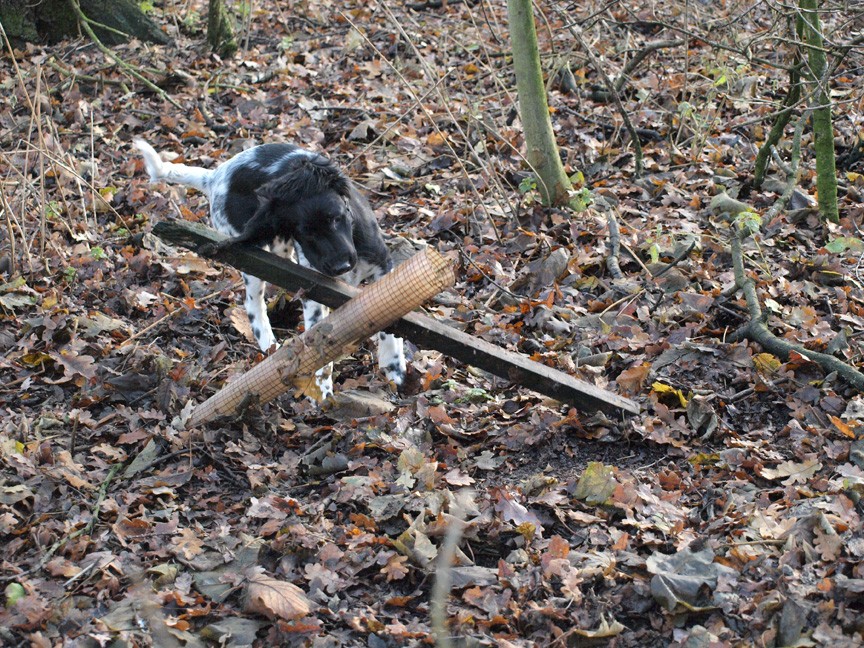 I like to tidy up the woodland